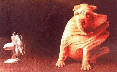 http://www.millenniumdogs.net/hum4.jpg