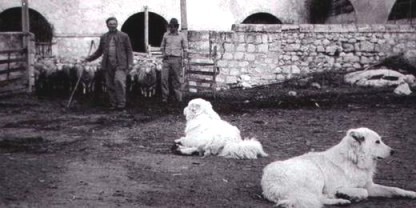 Sheep-farm in Abruzzo